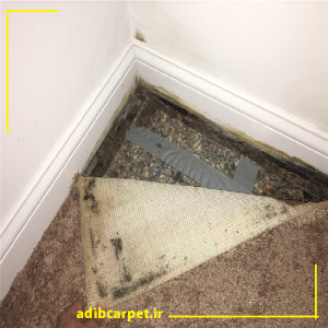 شستن-کپک-از-روی-فرش