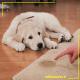 شستشوی لکه مدفوع از فرش