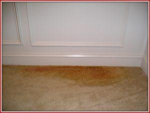 زرد-شدن-فرش-قالیشویی