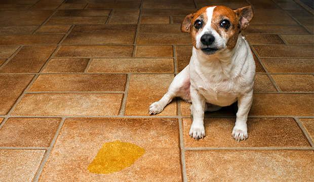 پاک-کردن-لکه-دستشویی-حیوانات