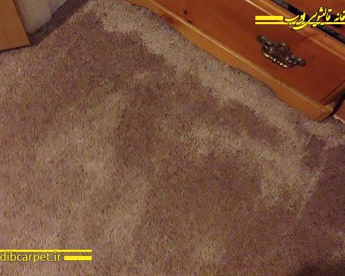 بوی نم قالیشویی,قالیشویی,قالی شویی,قالیشویی آنلاین,شستشوی فرش,کارخانه قالیشویی ادیب,قالیشویی ادیب,قالیشویی مجاز